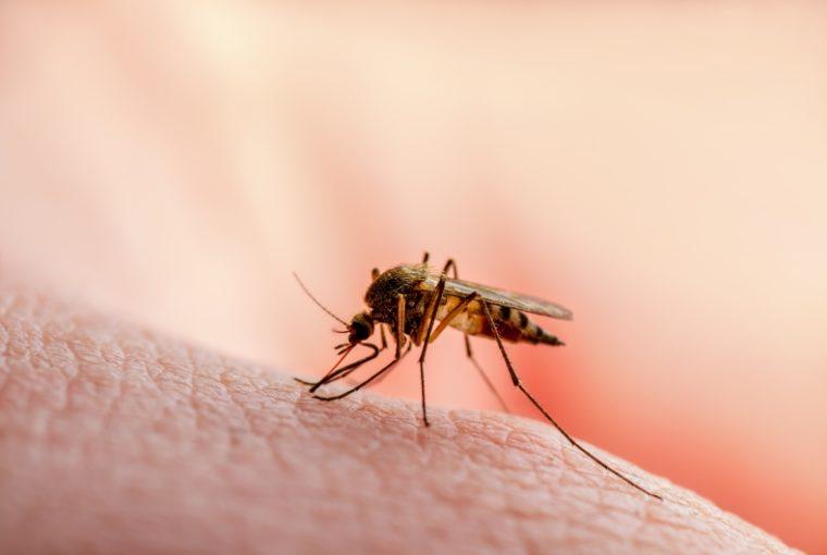 Trappole per le zanzare
