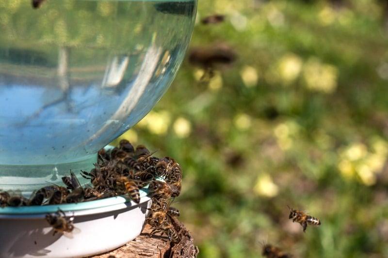 Abbeveratoio per api