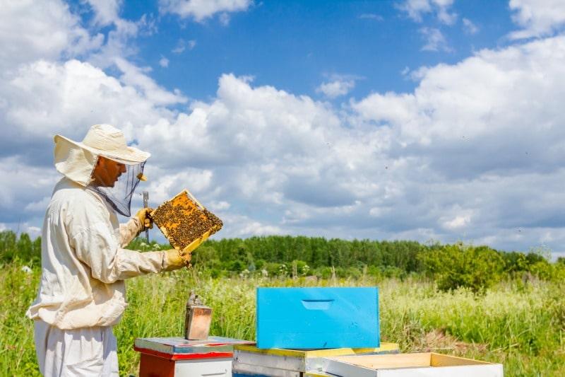 Tute per apicoltura